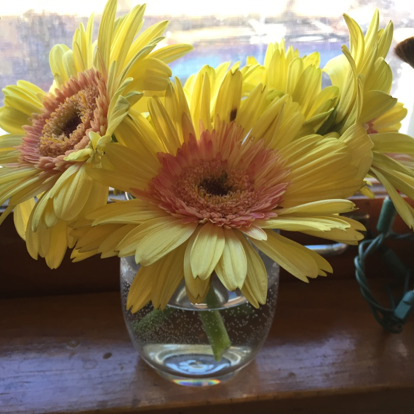 Thought I would add a photo of these sweet little yellow sunshines that cheer me up every day.